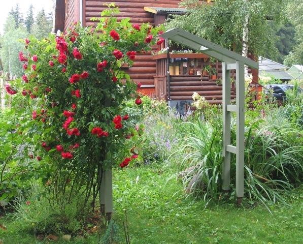 Фото опор для плетистых роз своими руками фото 26