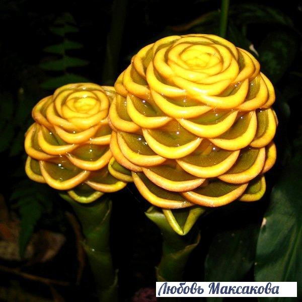 Самые необычные и красивые цветы