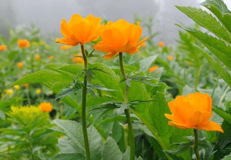 Алтай 2010 :: синенький цветочек